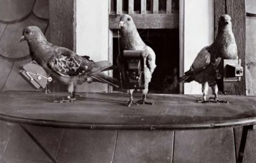 "Camera-ed pigeons: In 1903 Dr. Julius Neubronner patented a miniature pigeon camera activated by a timing mechanism. The invention brought him international notability after he presented it at international expositions in Dresden, Frankfurt and Paris in 1909–1911. Spectators in Dresden could watch the arrival of the camera-equipped carrier pigeons, and the photos were immediately developed and turned into postcards which could be purchased."" - Public Domain Review"