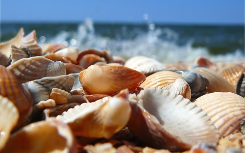 Shells-on-the-beach