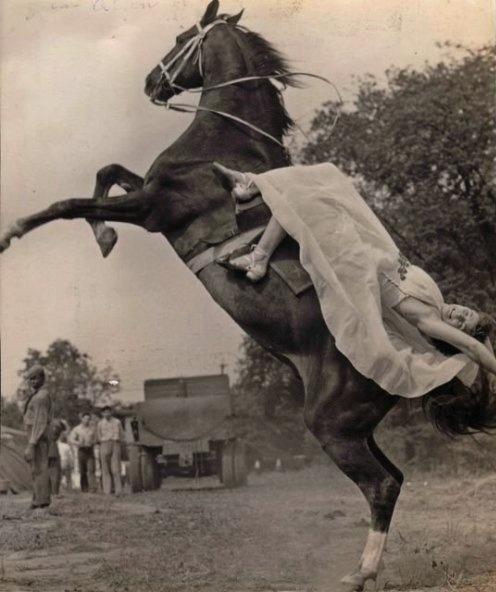 circus-horse